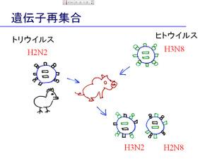 Pp_virus1