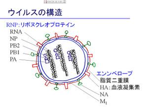 Pp_virus2
