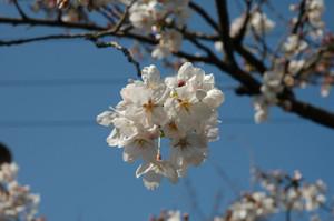 Dsc_358501flower