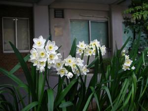 Dscn894302flower