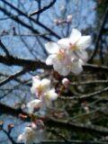 四国お遍路クエスト:春は四国から