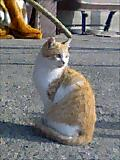 四国お遍路クエスト:猫